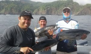 yellowfin tunas caught popping inshore fishing on vacation in panama