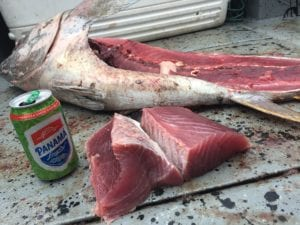 amberjack filets fresh from fishing vacation in panama