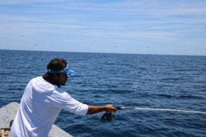 captain alex throwing the popper hoping to catch large yellowfin tuna
