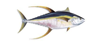 tuna-coast-hannibal-banks-coiba-panama-big-game