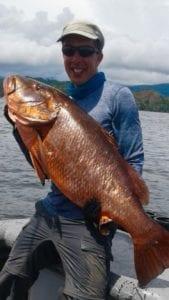 large grouper caught inshore fishing near cebaco bay