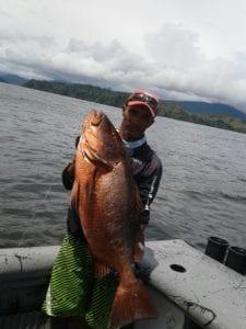 cubera snapper caught inshore fishing near cebaco island