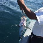 proper way to release a fish in panama while offshore fishing hannibal banks